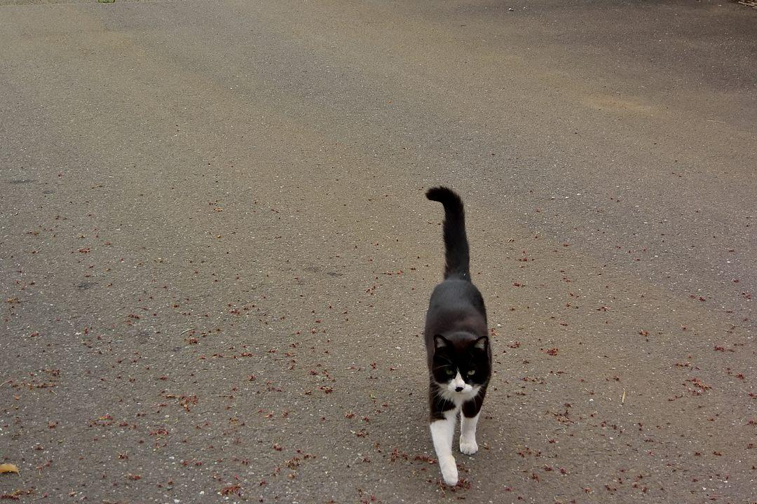 初めて見る猫が、寄って来ました