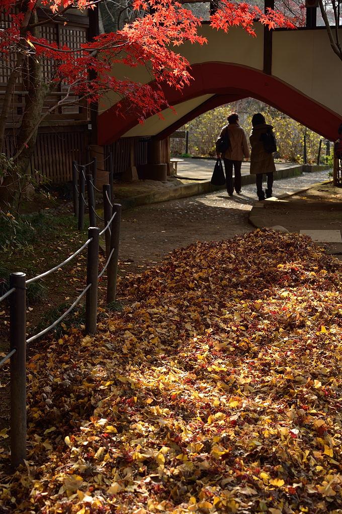 集められた落葉