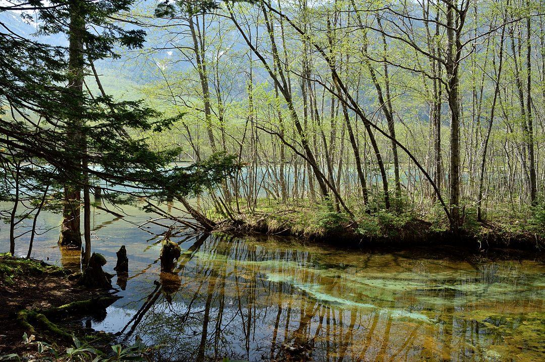 【14:27】 大正池へ流れ込む清流