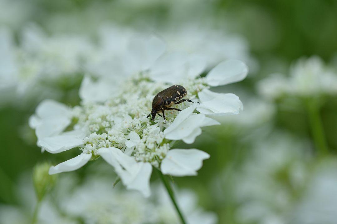 食事中の甲虫