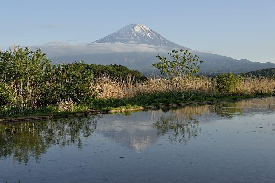 水が入った田圃の逆さ富士