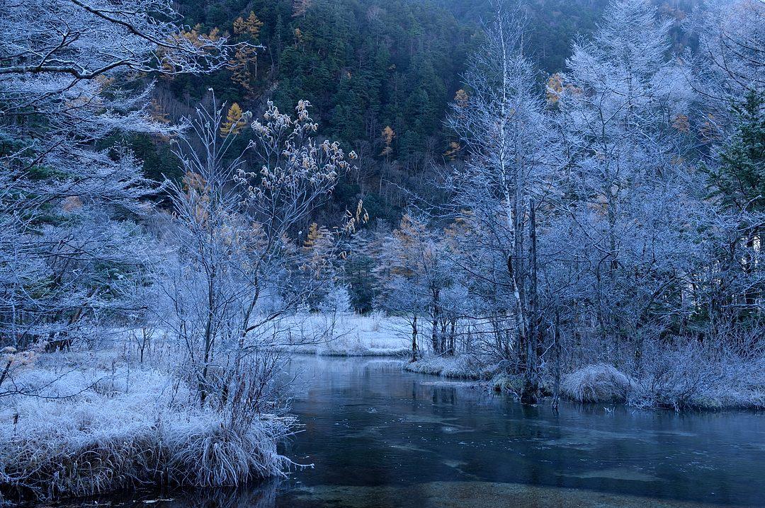 樹や草にびっしりと霜が降りています