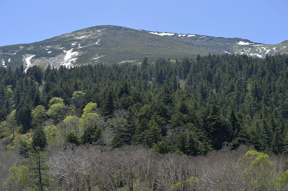 至仏山 from 見本園