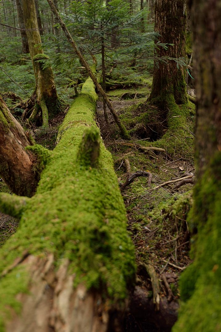 苔生した倒木