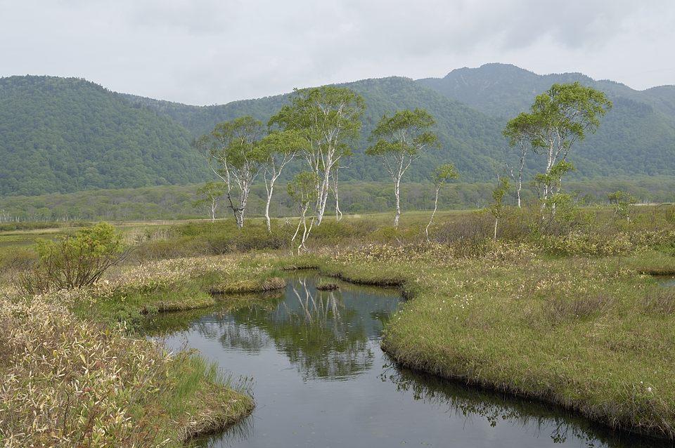 下ノ大堀の白樺林