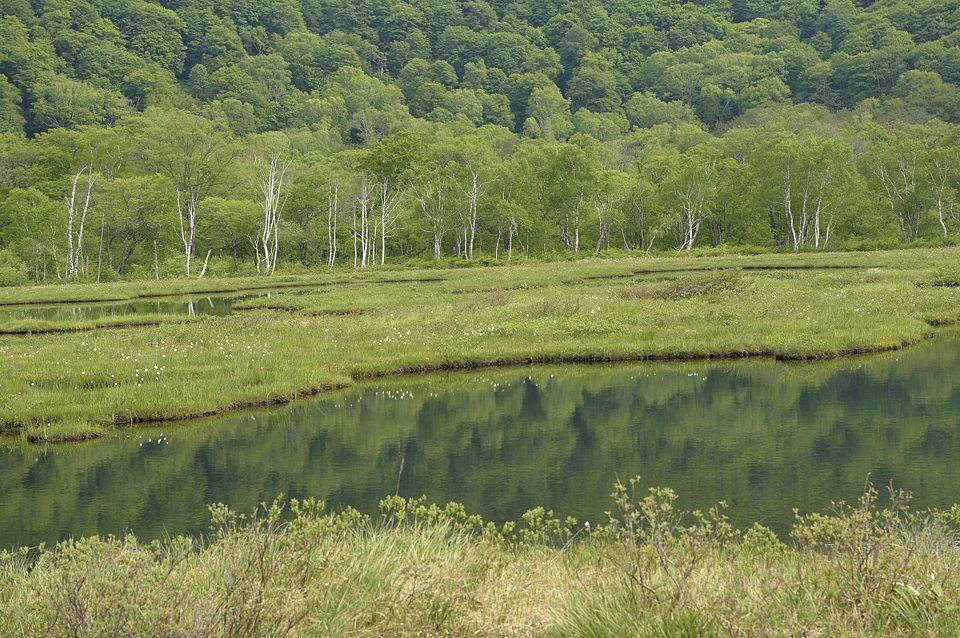 上田代の拠水林
