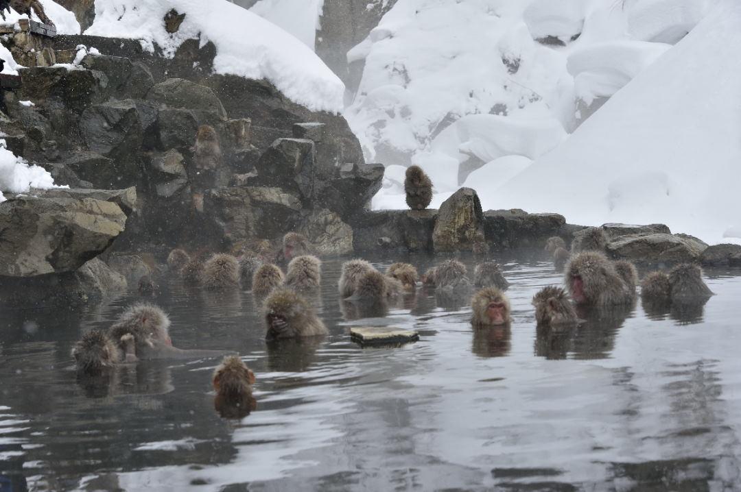 入浴中の猿達