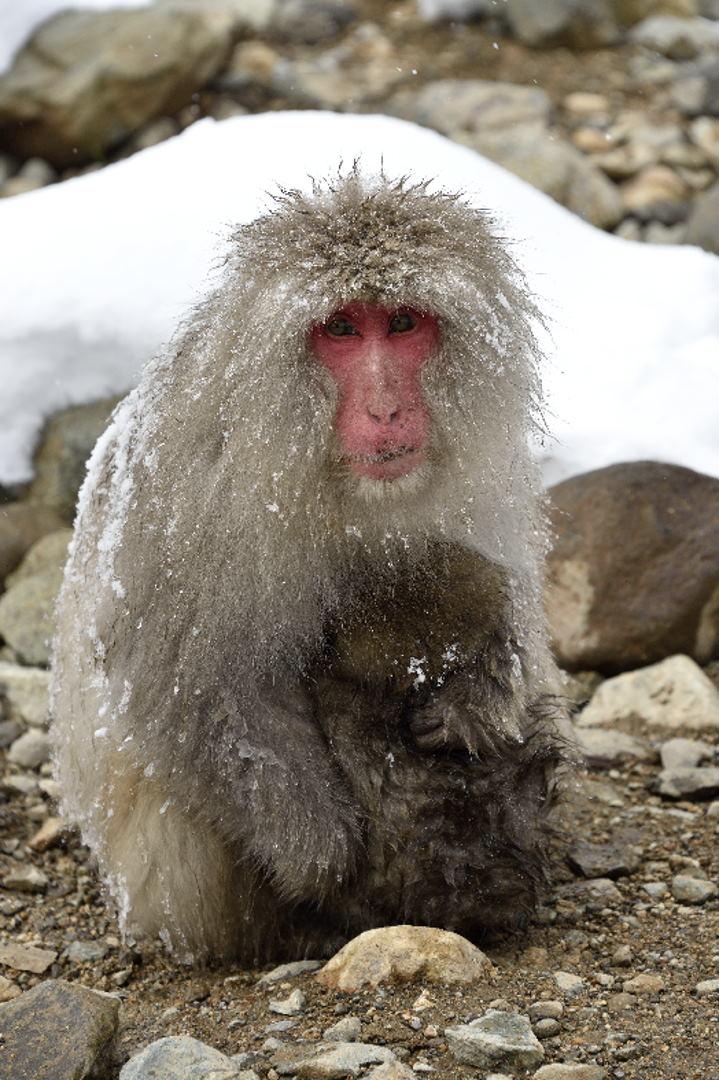 寒そうな親子猿
