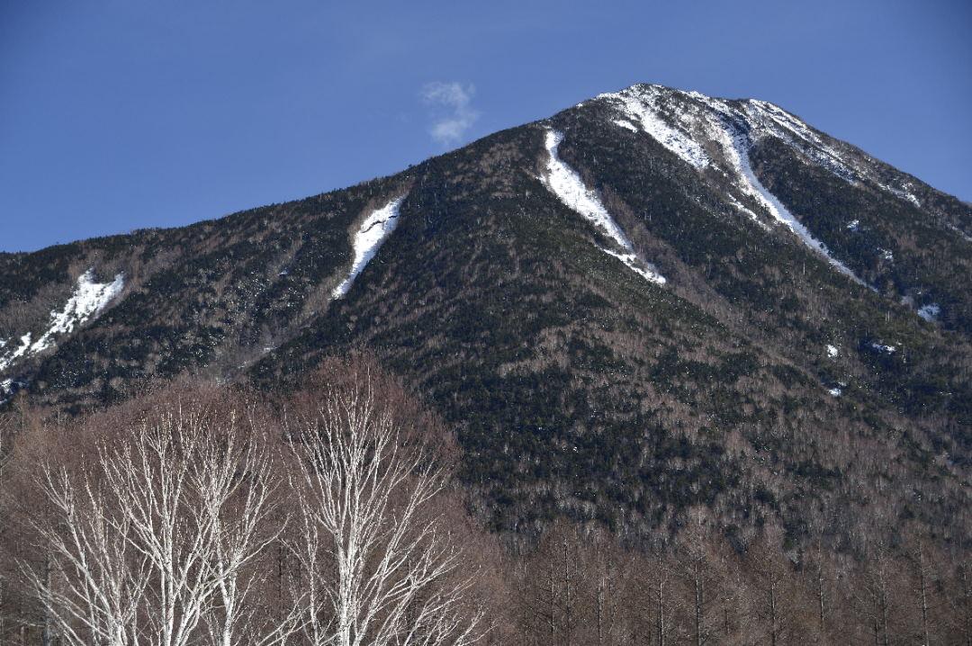 男体山と白樺