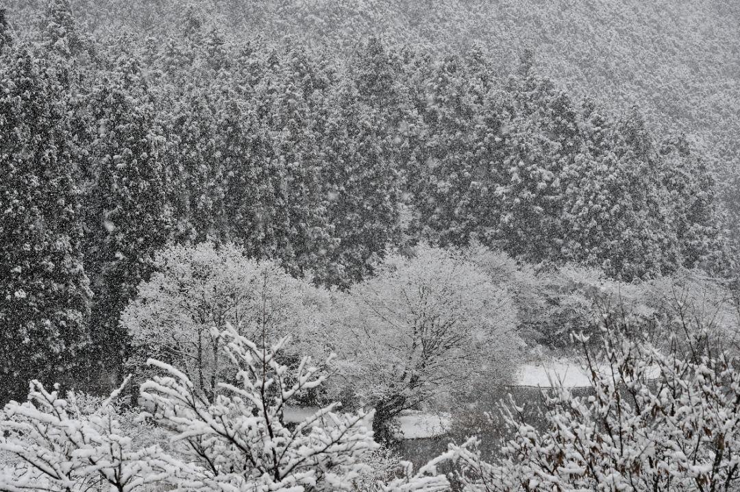 田貫湖の雪景色