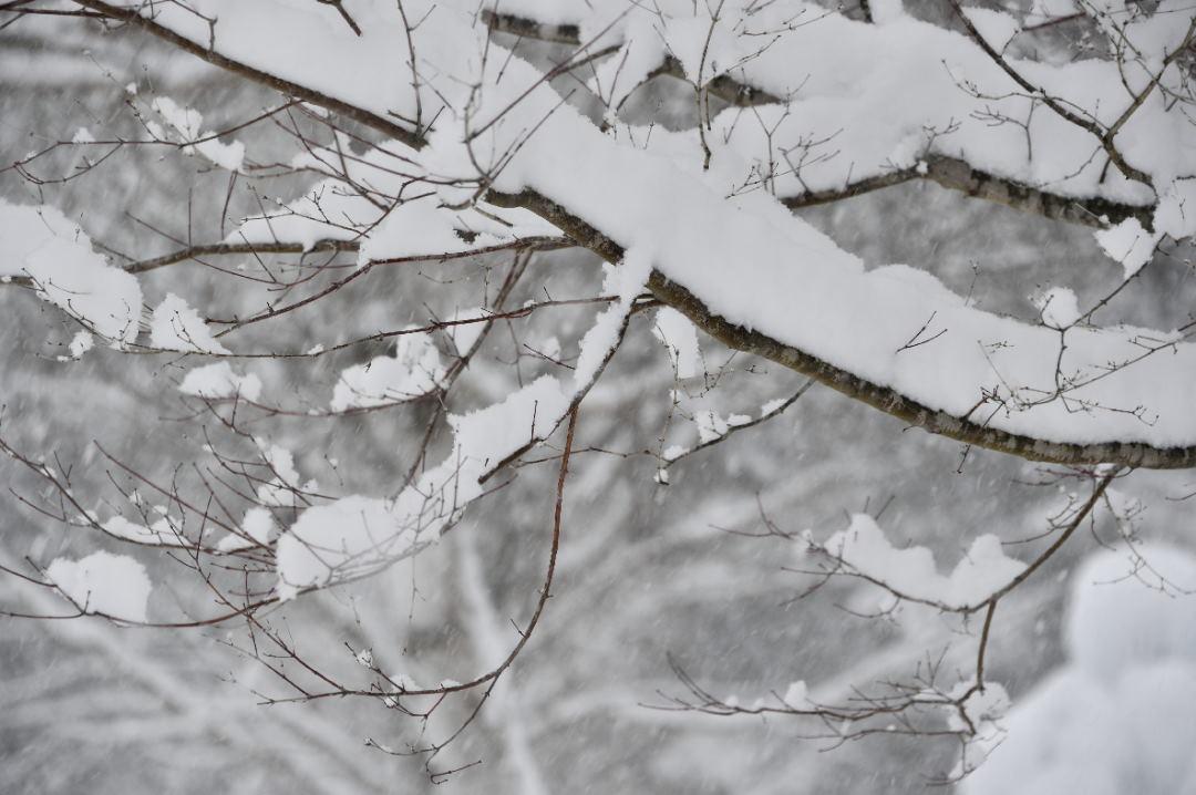 枝に積もる雪