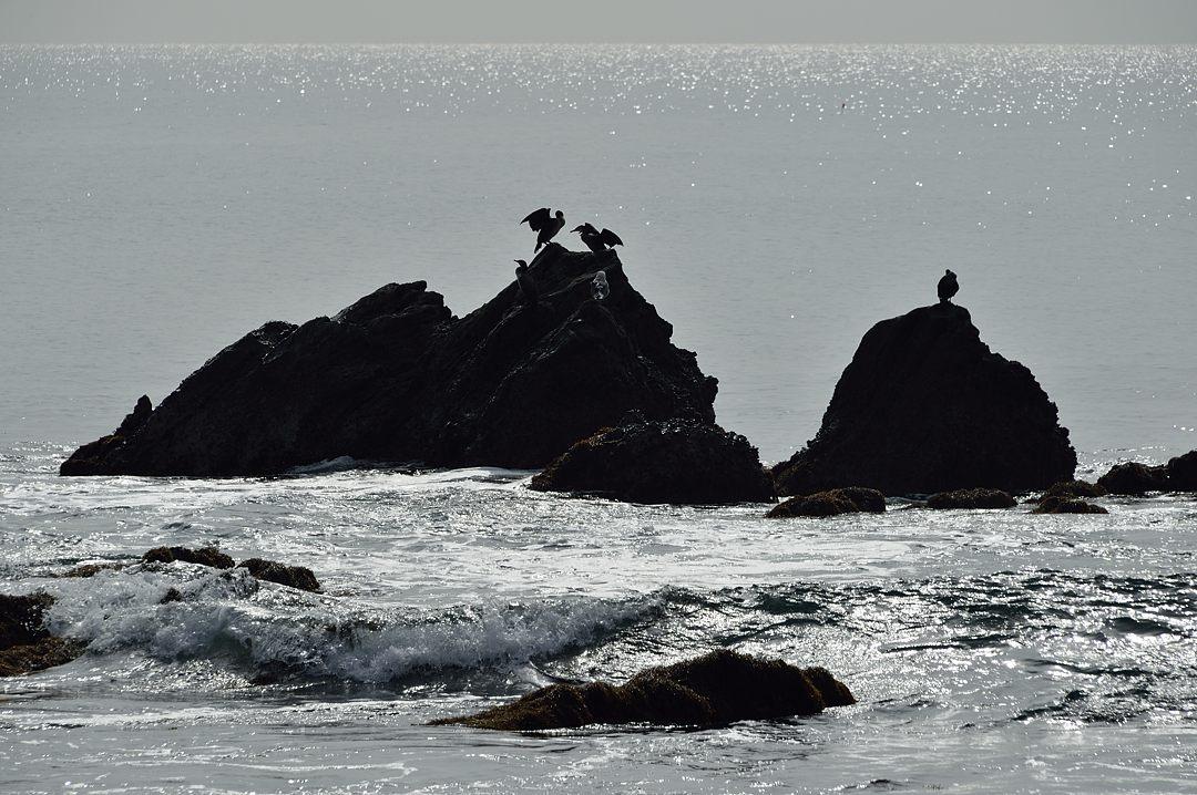 羽を乾かす海鳥達