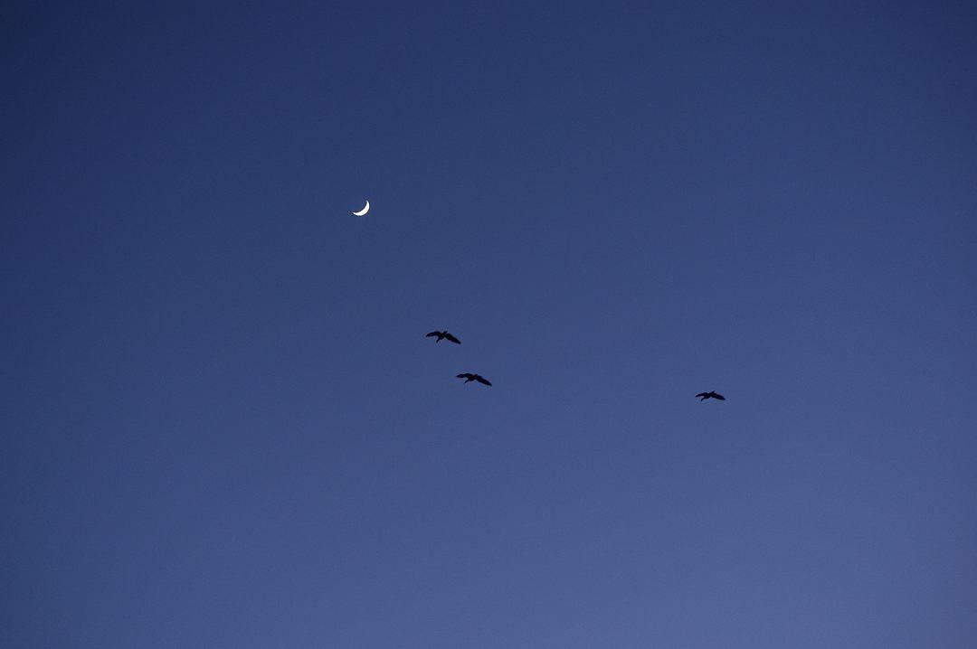 月齢4日の月と雁