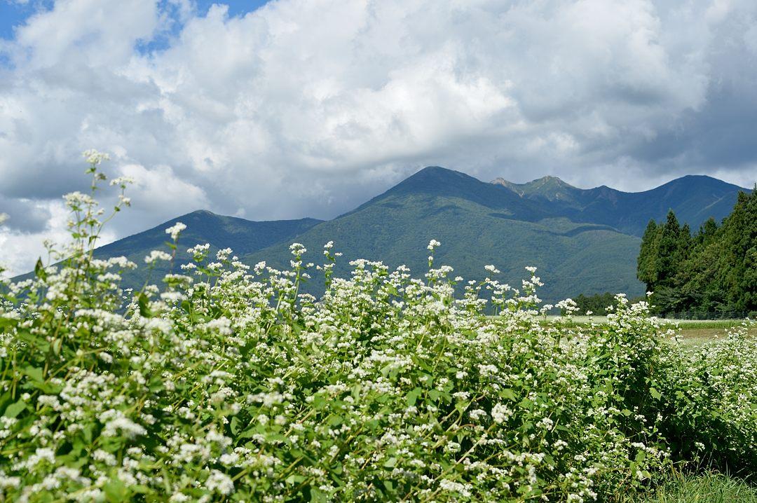 八ヶ岳を背景に