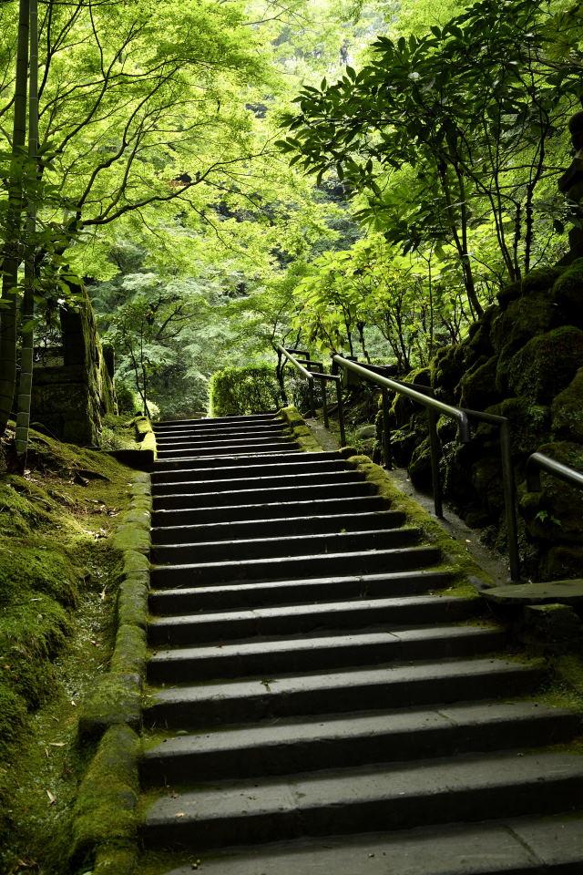 墓所への階段