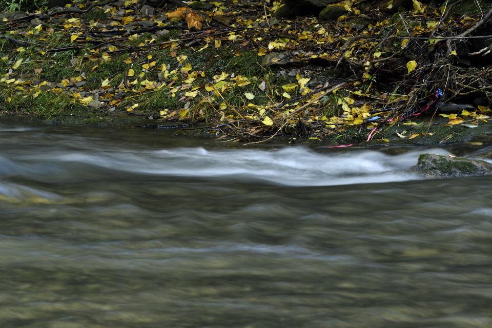 渓流と落葉