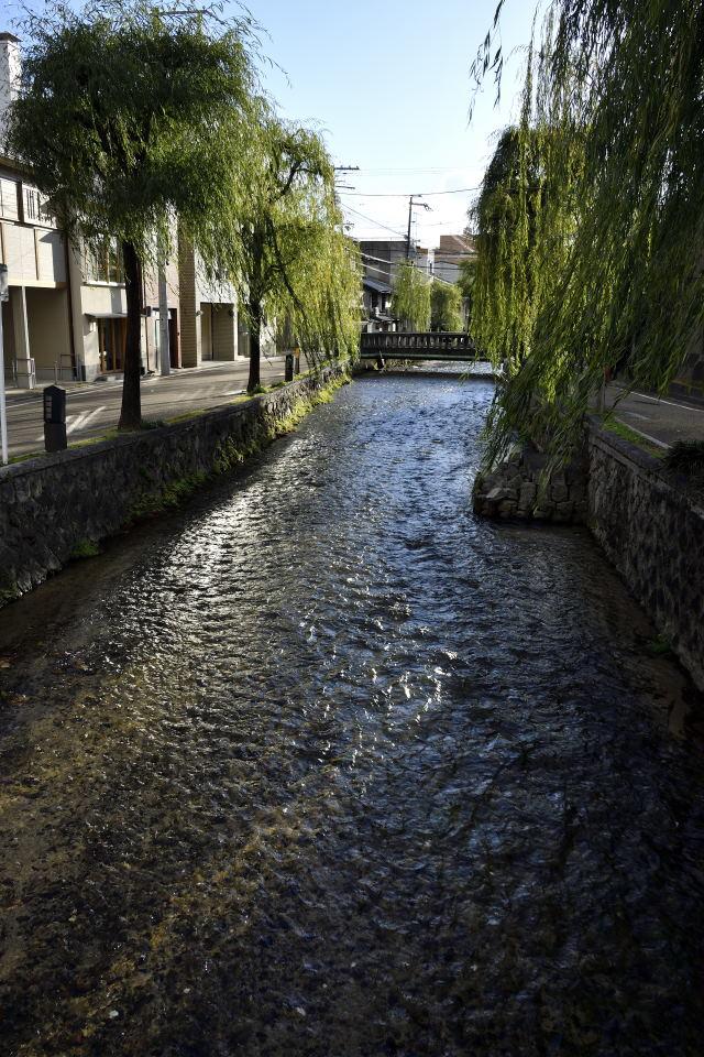 白川の流れ