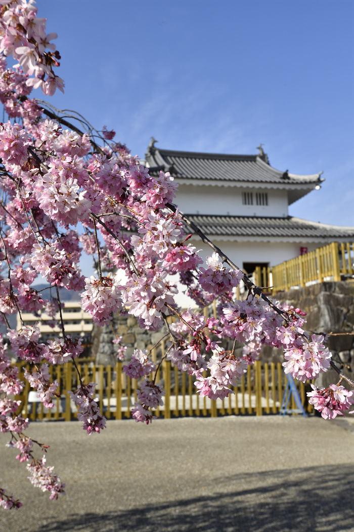 枝垂桜と櫓