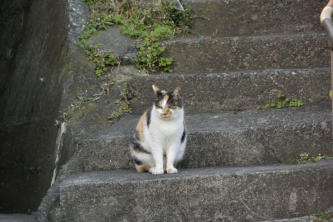 湘南のネコ