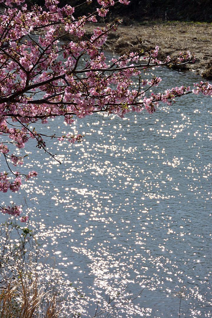 川面の陽光