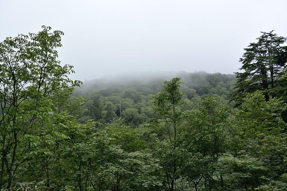 鳩待峠への山道からの眺め