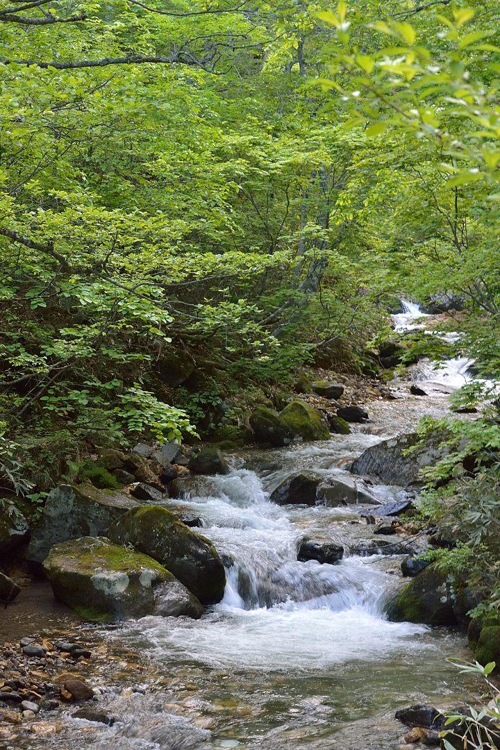 新緑眩しい渓谷:一ノ瀬~岩清水