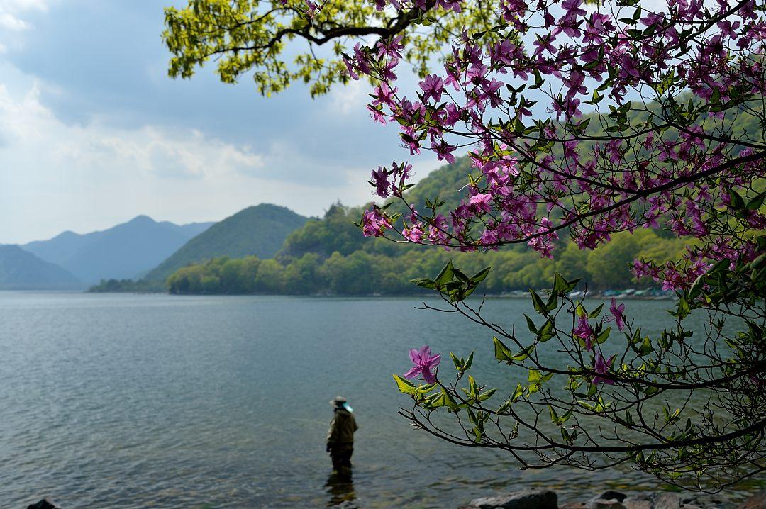 湖畔のトウゴクミツバツツジ