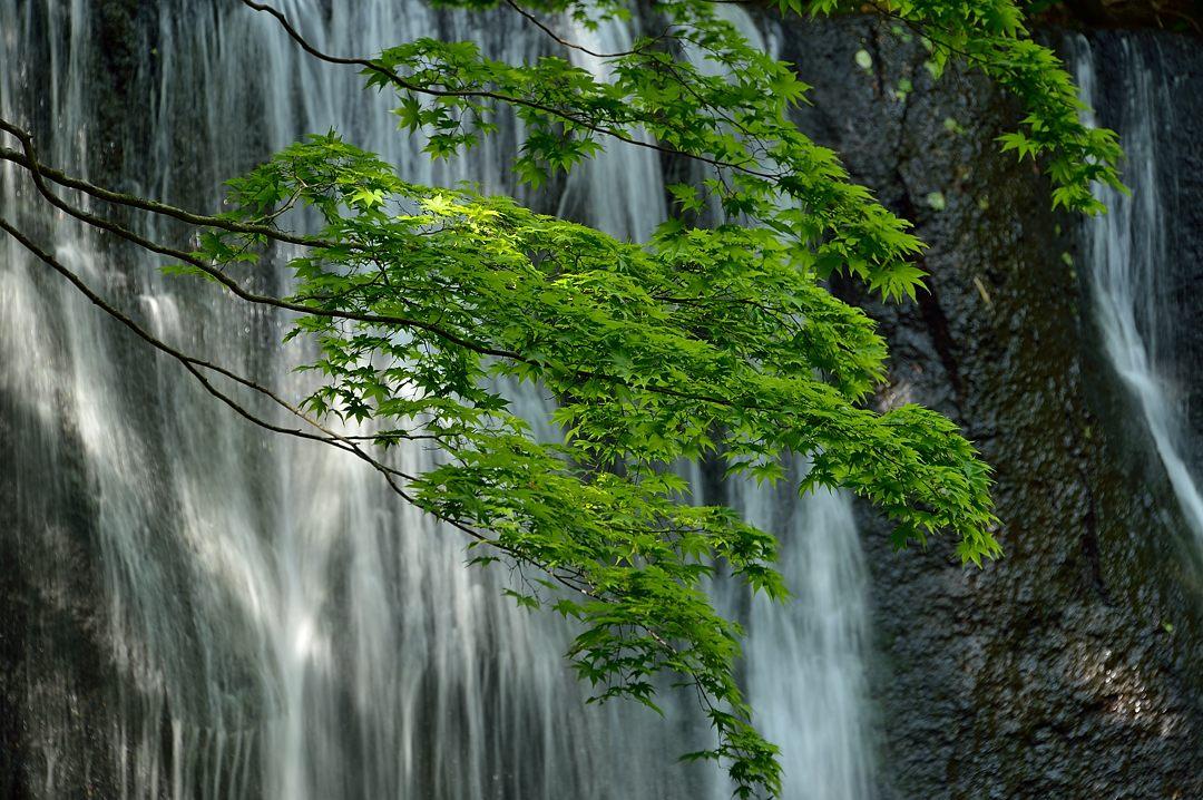 滝前の新緑