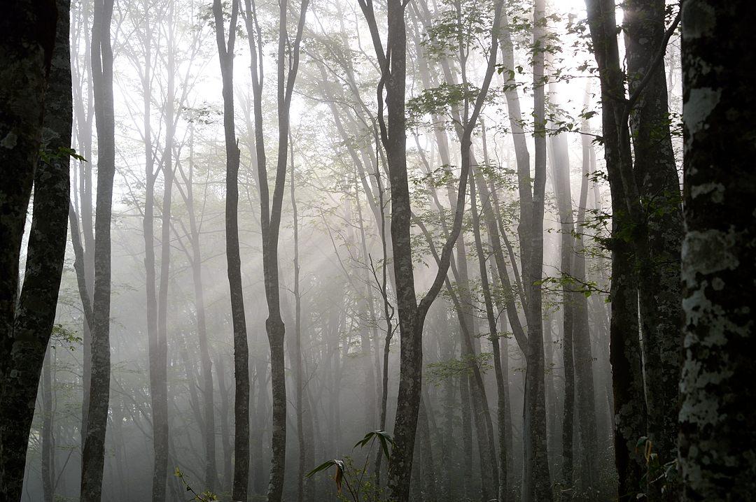 06:32 橅林の光芒