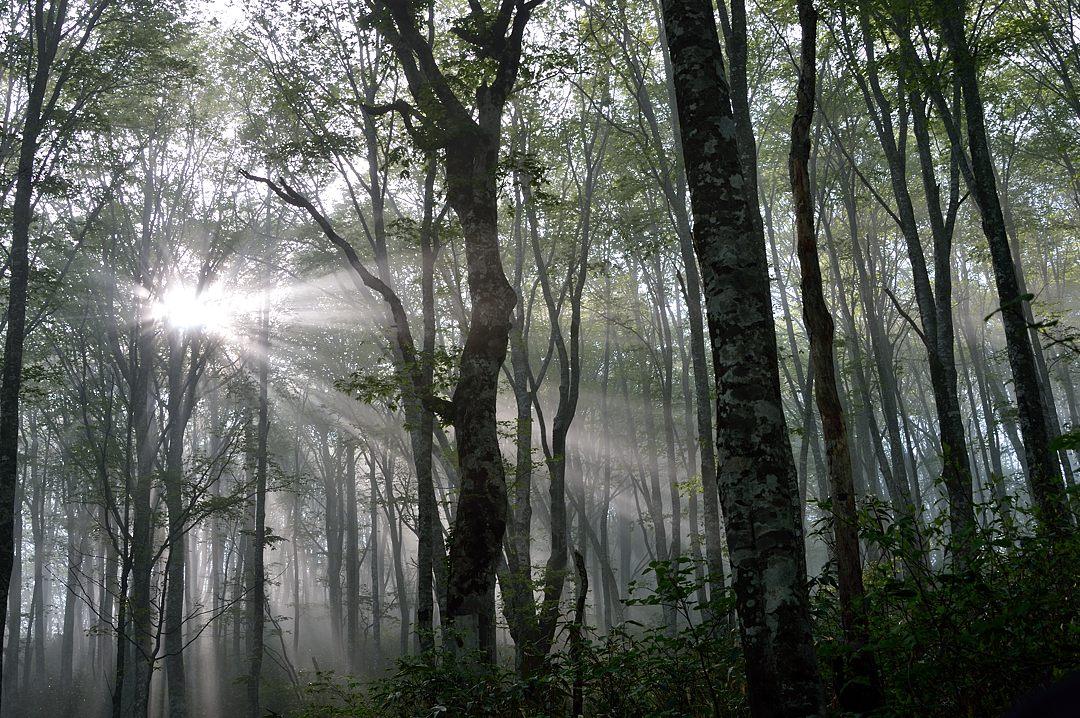 06:45 橅林の光芒