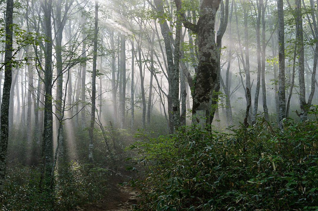 06:46 橅林の光芒