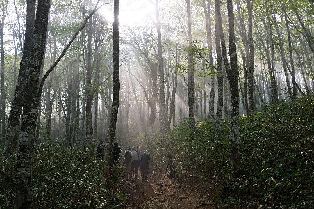 06:52 橅林の光芒