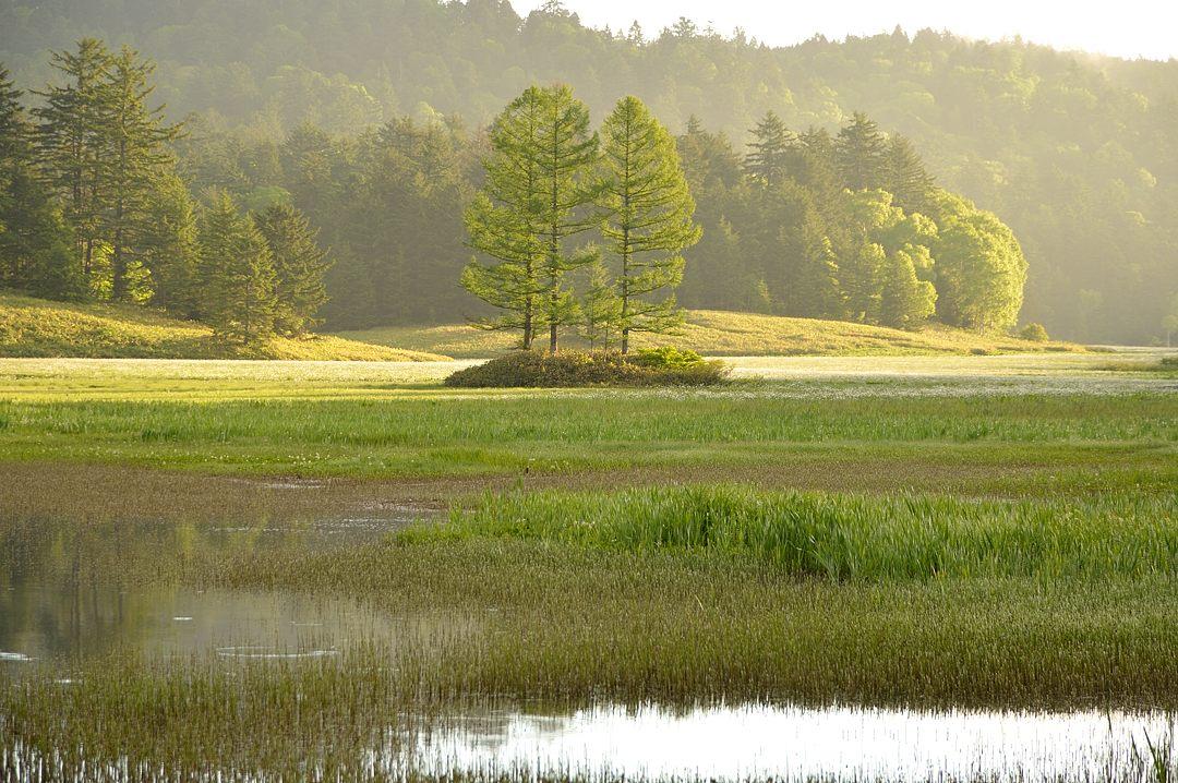 湿原が白っぽい