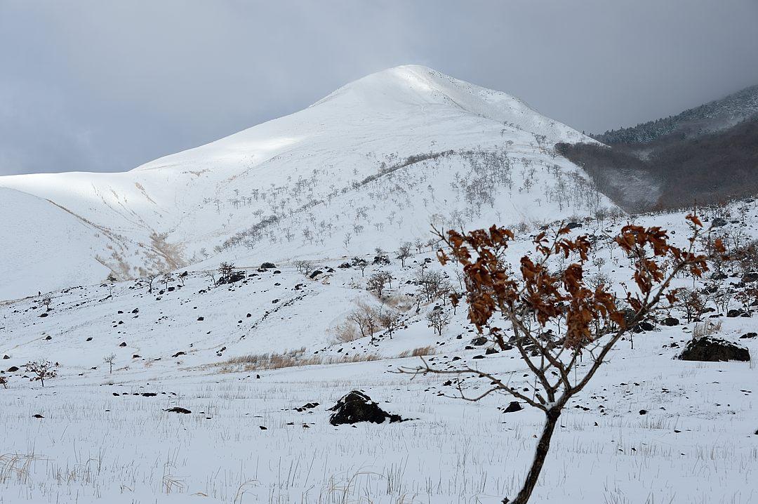【09:35】 冬景色の由布岳