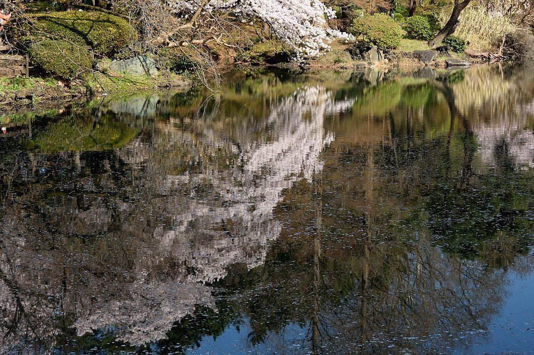 水面の反射