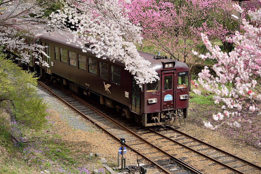 普通列車・1
