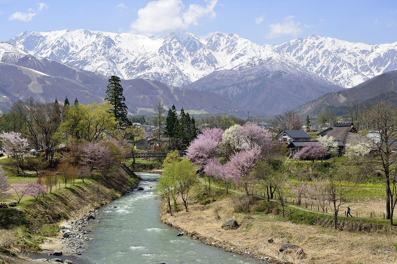 白馬連峰と桜