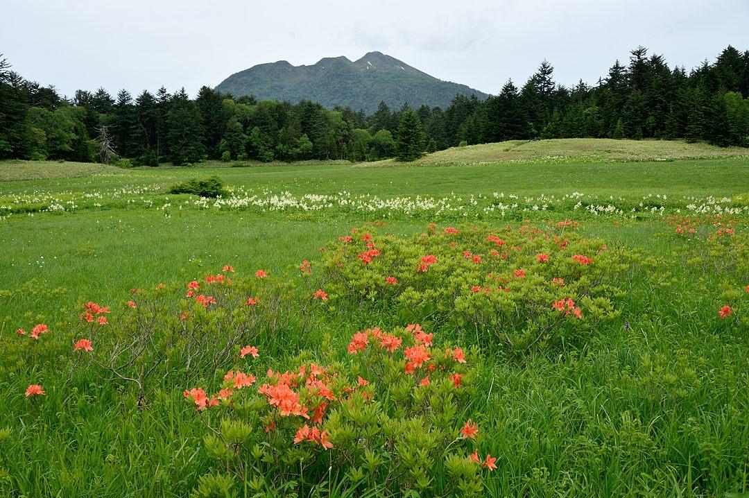 大江湿原からの燧ケ岳