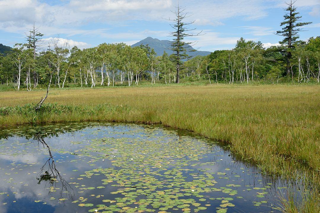 見本園の池塘