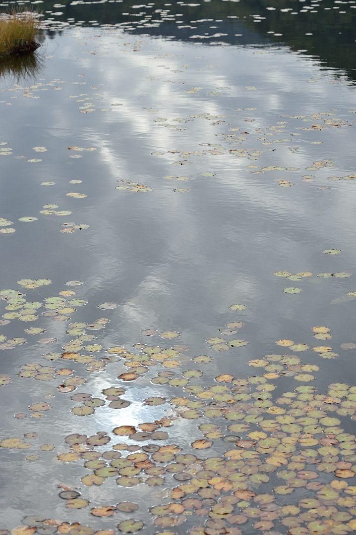 池塘への映りこみ
