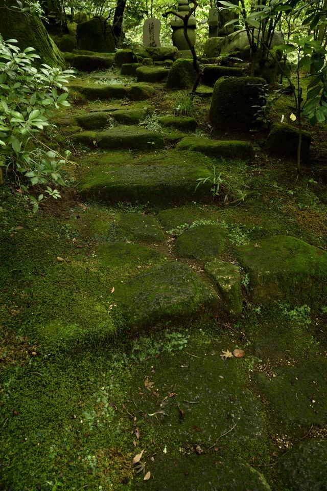 苔生した墓前への径