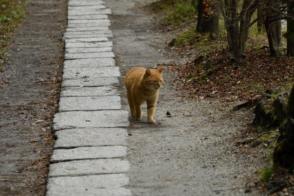 猫もお散歩