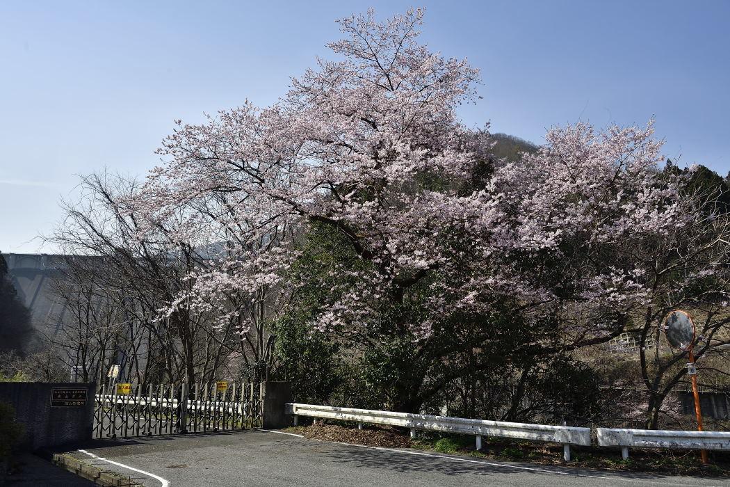 浦山ダム入口