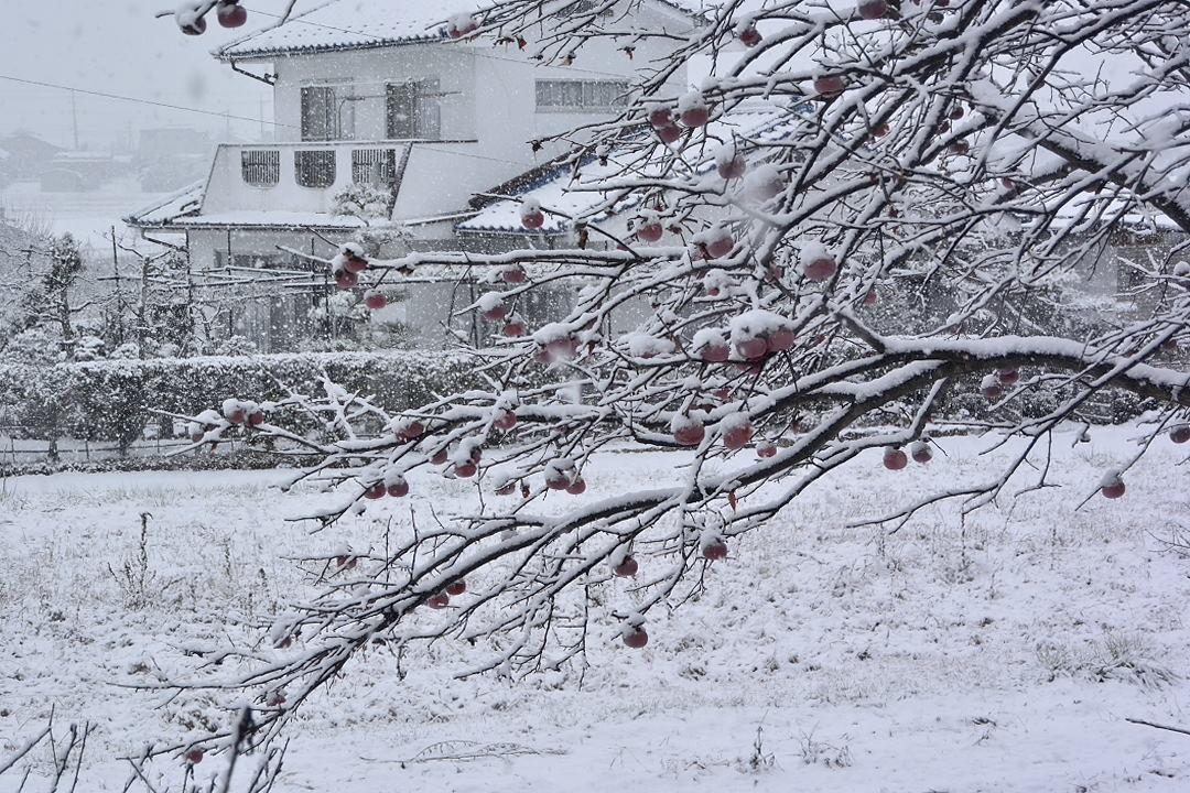 上田交通別所線・沿線の雪景色