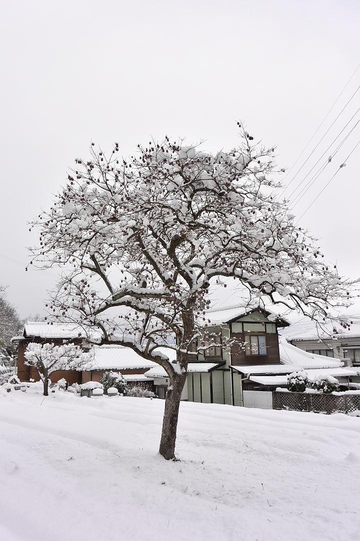 昨日より雪が積もっている