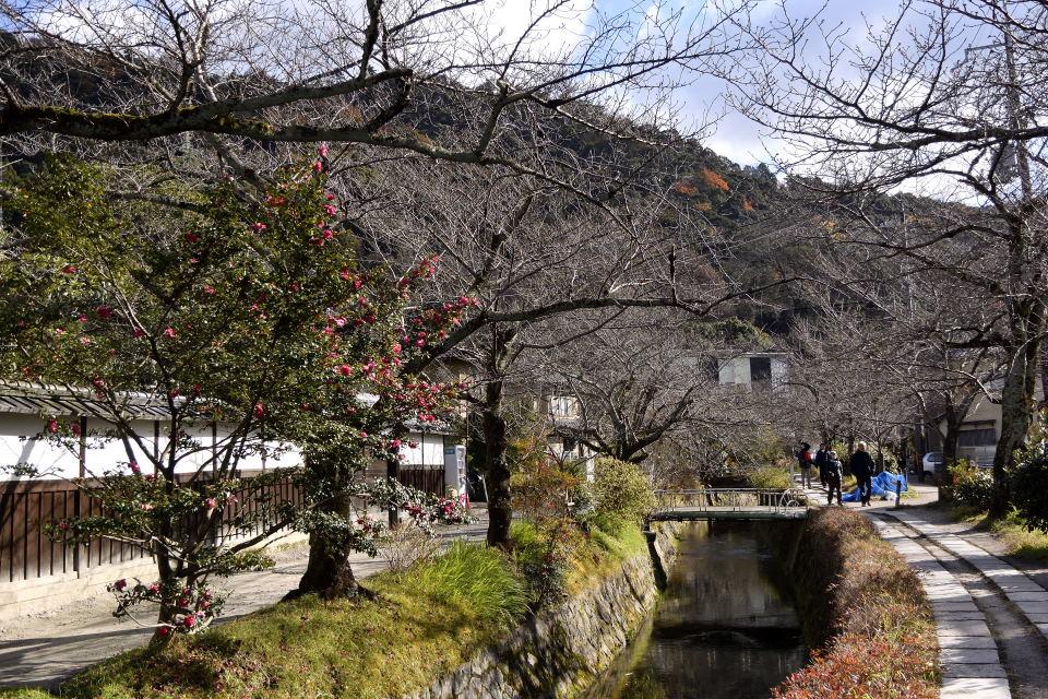 山茶花咲く散歩道